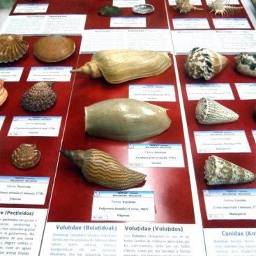 Exposición de moluscos museo