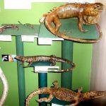 exposición de reptiles