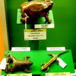 Exposición de anfibios bizkaia