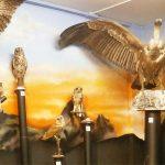 exposición de aves museo