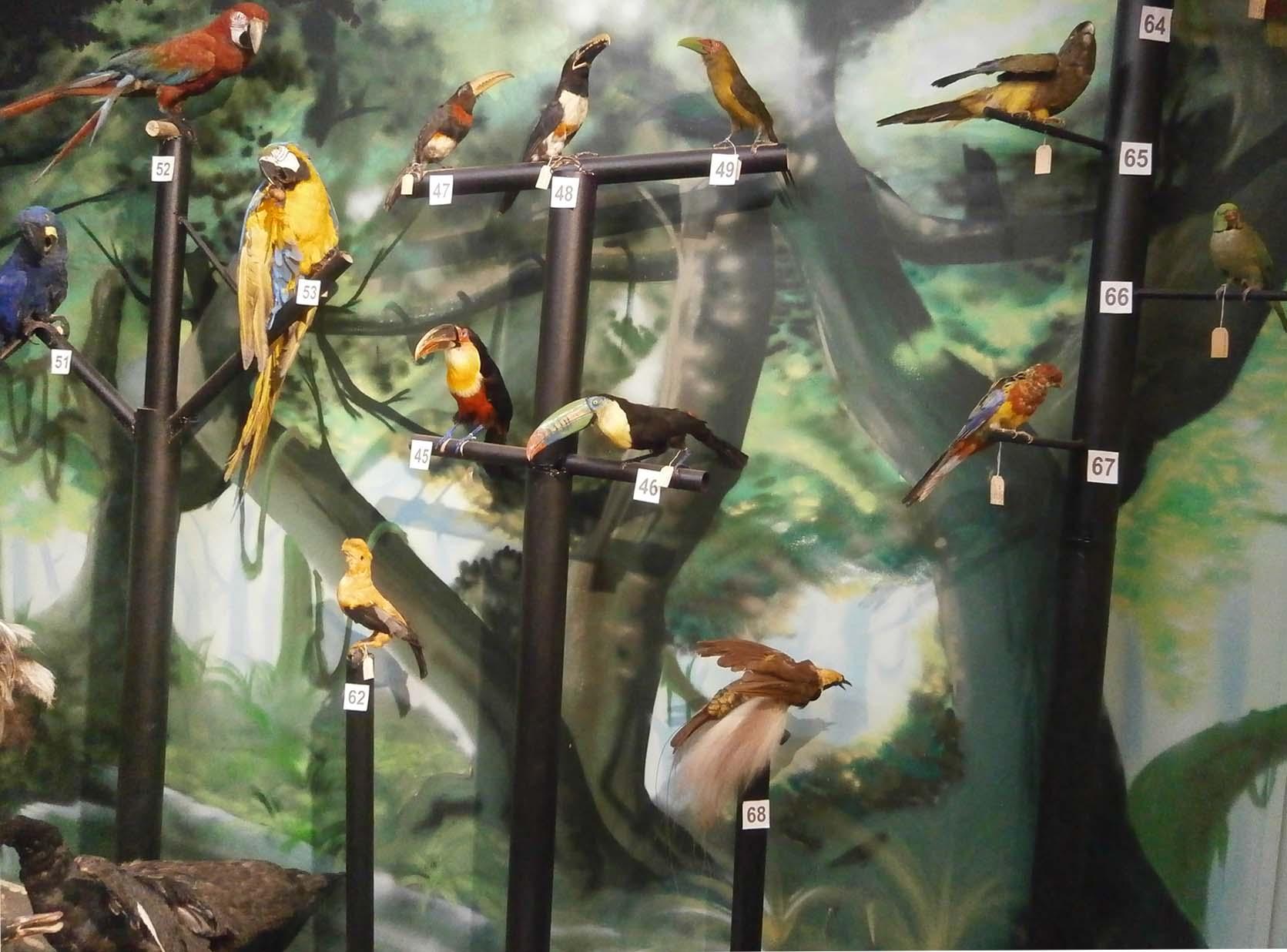 Aves exposición