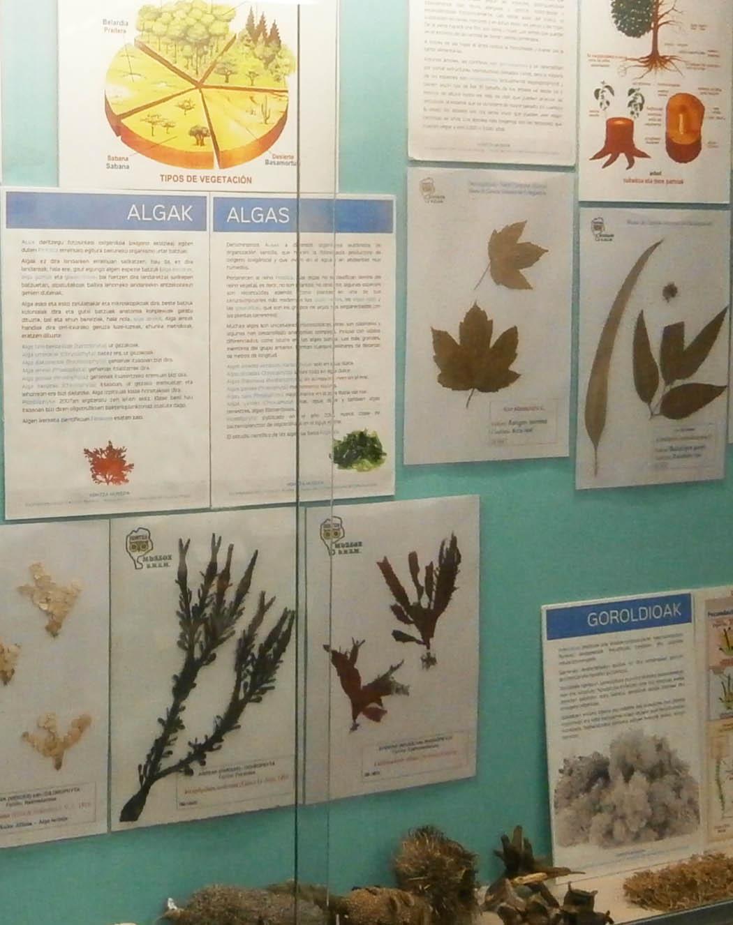 Exposición de botanica bizkaia